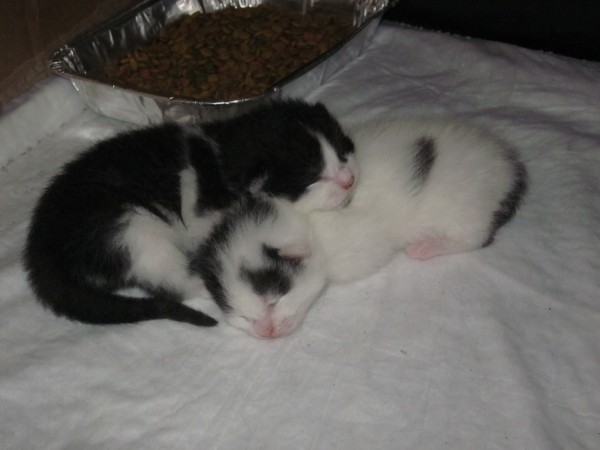 Here are both of Fluffy's babies at exactly 1 week old!