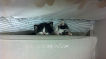 Kittens in the Pillows