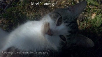 Meet Courage