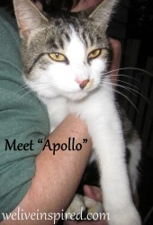 Apollo-Feral Cat of the Week