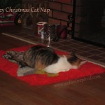 Tangerine , an adopted colony cat napping in her favorite Christmas spot.