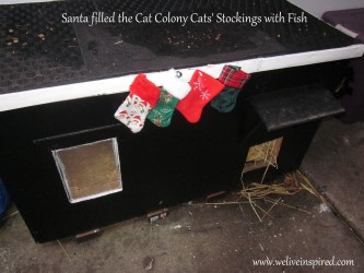 "For the un-adopted cat colony cats that live outside and love their human caregivers, 4 little stockings with a can of fish in each were hung on their ""house"" (one of the large winter shelters we built that a few of them share)."