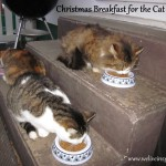 Here are a few of the colony cats eating Christmas Breakfast (They got the fish for Christmas supper)