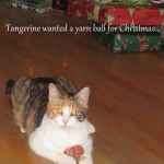 Tangerine has been known to get in to the humans knitting bags and pull out yarn.  She is obsessed with yarn balls, and so Santa gave her one!