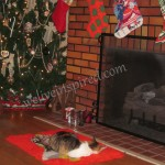 Doesn't this look like a cozy Christmas card scene?  My parents adopted colony cat Tangerine again...