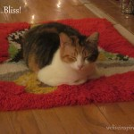 Tangerine, the colony cat my parents adopted, LOVES the latch hook Christmas rug by the hearth