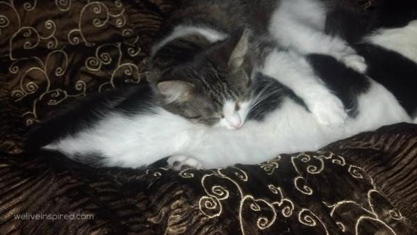 cats sleeping