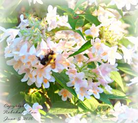 Bekahs Bee Copyright