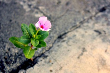 flower blooming in concrete crack
